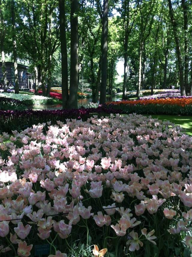 Keukenhof Taman Bunga Belanda